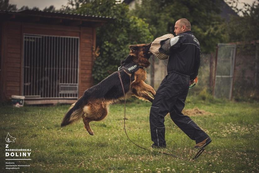 trening-z-psem