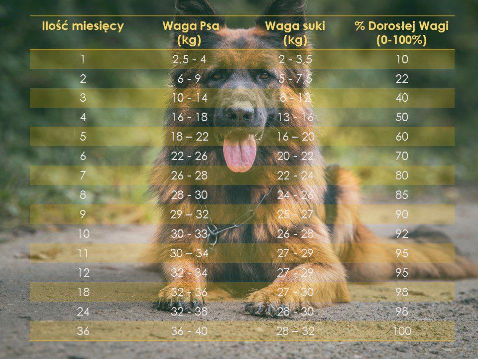 owczarek-niemiecki-waga-tabela