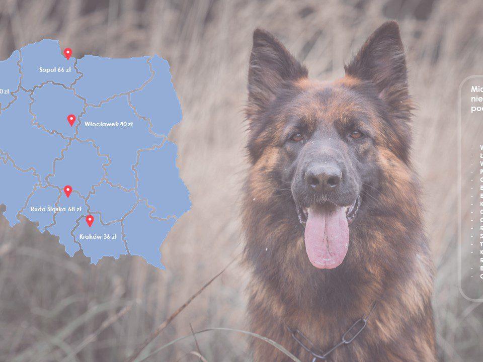 podatek-od-psa-mapa