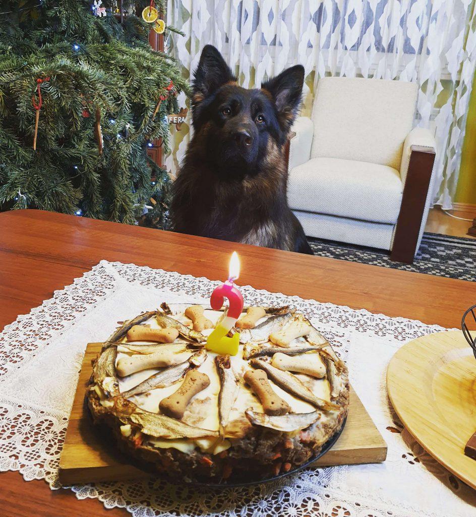 tort-dla-psa